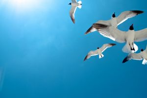 seagulls in blue sky